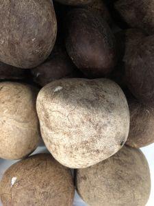 Copra Dry Coconuts