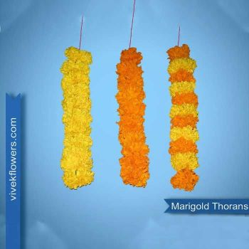 Marigold Thoran - 1 Feet